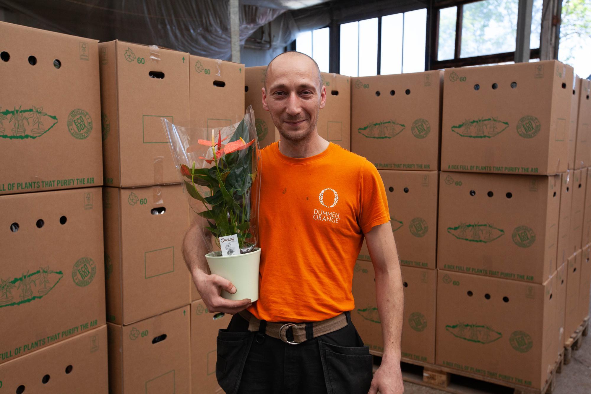 Vindicat kleurt Groningse verzorgingstehuizen Oranje met Anthurium planten op Bevrijdingsdag